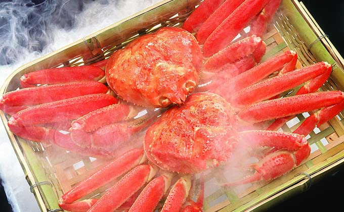 Live snow crab from the Sea of Okhotsk